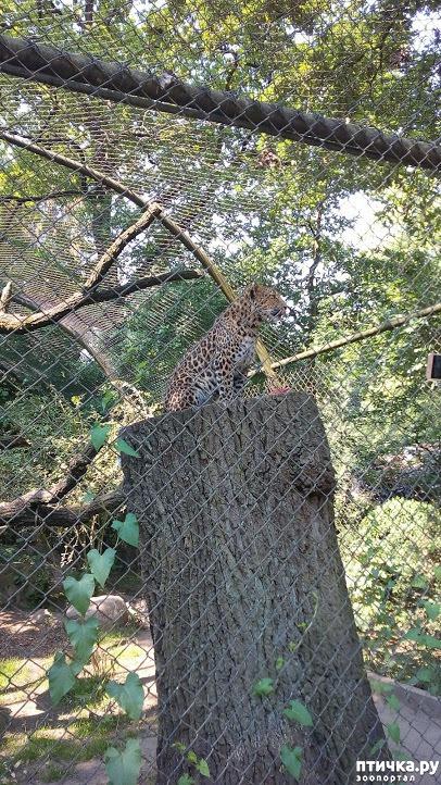 фото 28: Как я прошлась по зоопаркам