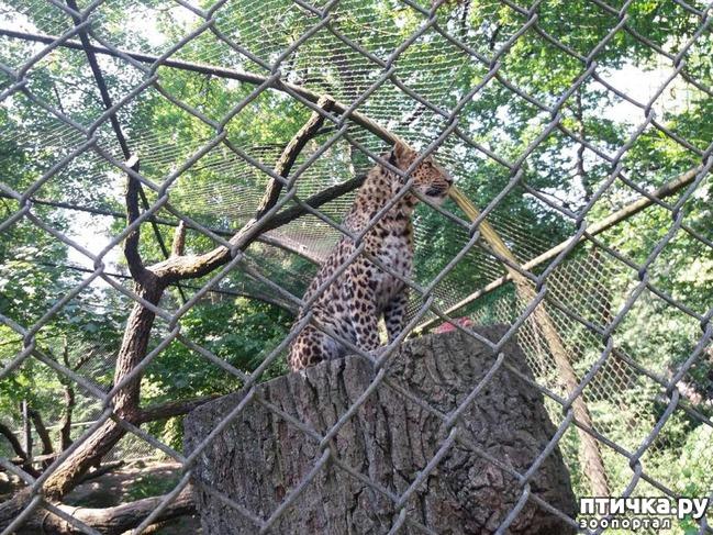 фото 29: Как я прошлась по зоопаркам