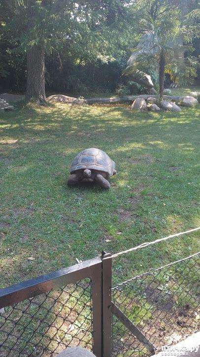 фото 31: Как я прошлась по зоопаркам