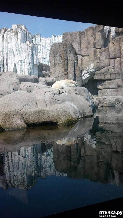 фото 33: Как я прошлась по зоопаркам