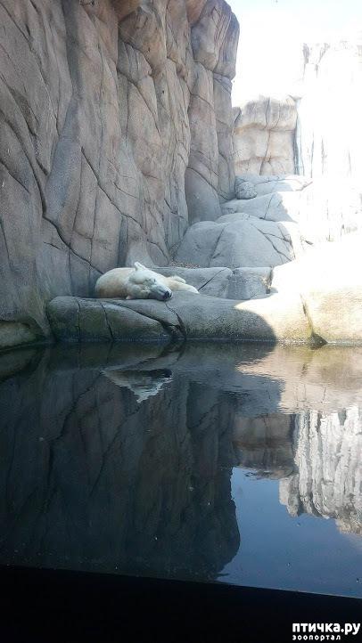 фото 34: Как я прошлась по зоопаркам