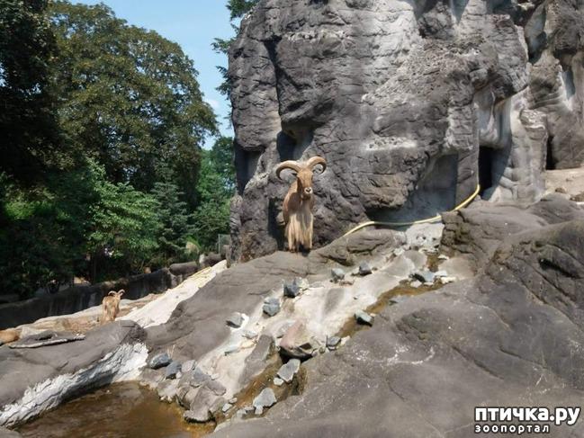 фото 35: Как я прошлась по зоопаркам