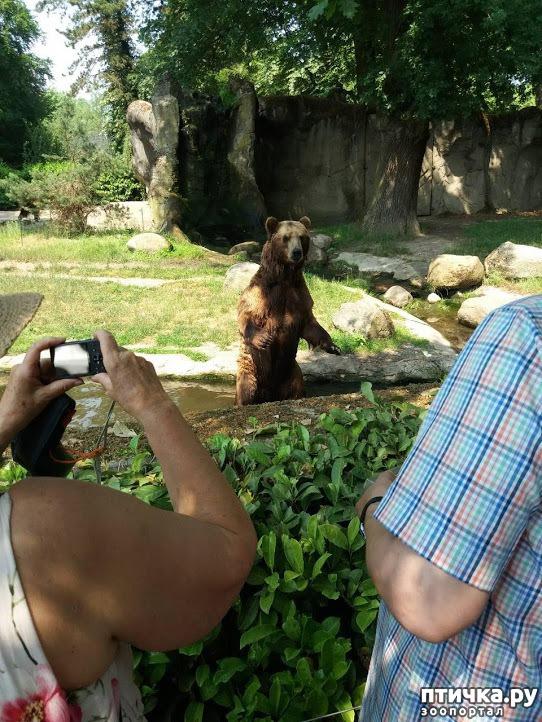 фото 38: Как я прошлась по зоопаркам
