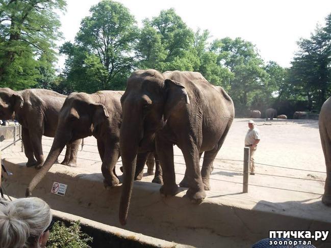 фото 40: Как я прошлась по зоопаркам