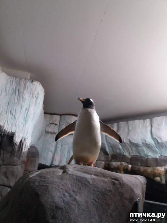 фото 39: Как я прошлась по зоопаркам
