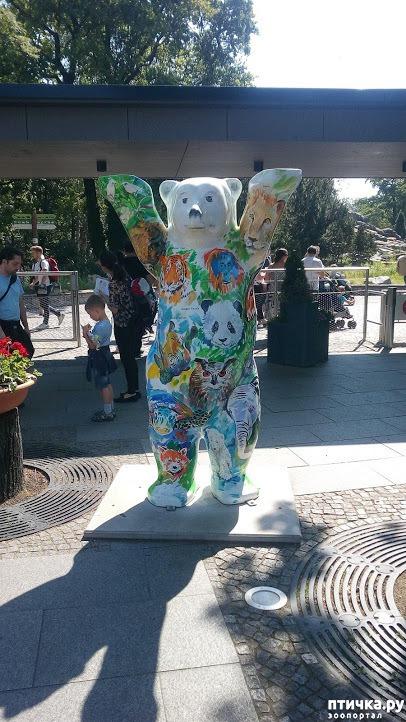 фото 1: Как я прошлась по зоопаркам