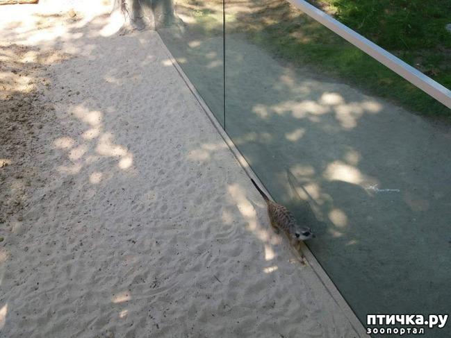 фото 2: Как я прошлась по зоопаркам