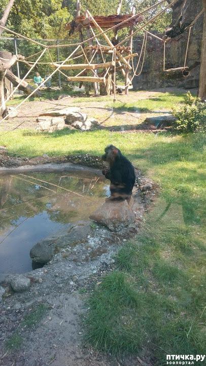 фото 3: Как я прошлась по зоопаркам