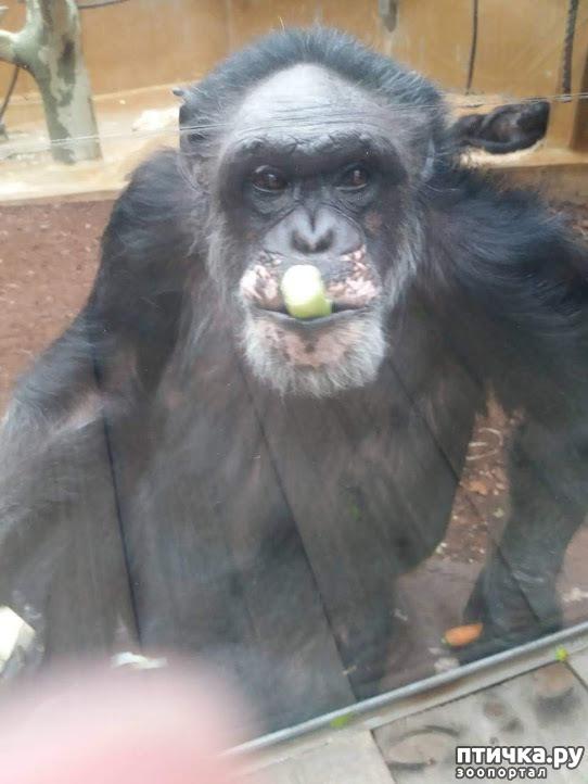 фото 4: Как я прошлась по зоопаркам