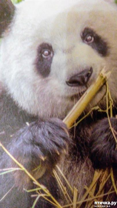 фото 8: Как я прошлась по зоопаркам