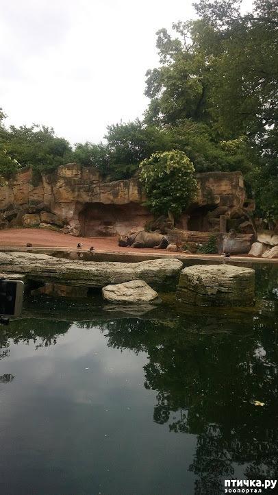 фото 9: Как я прошлась по зоопаркам