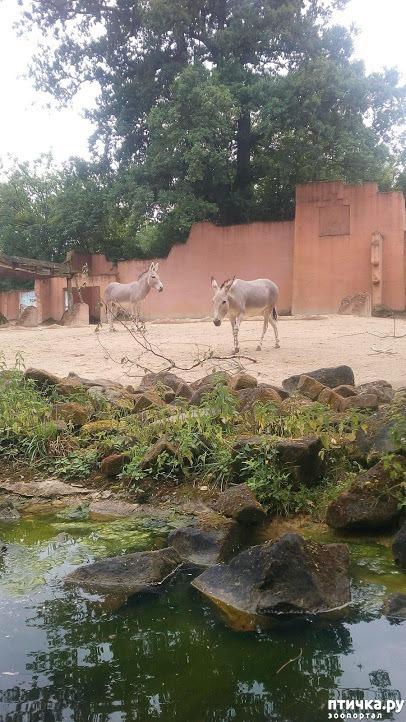 фото 10: Как я прошлась по зоопаркам
