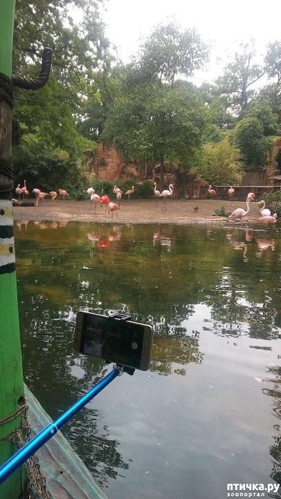 фото 12: Как я прошлась по зоопаркам