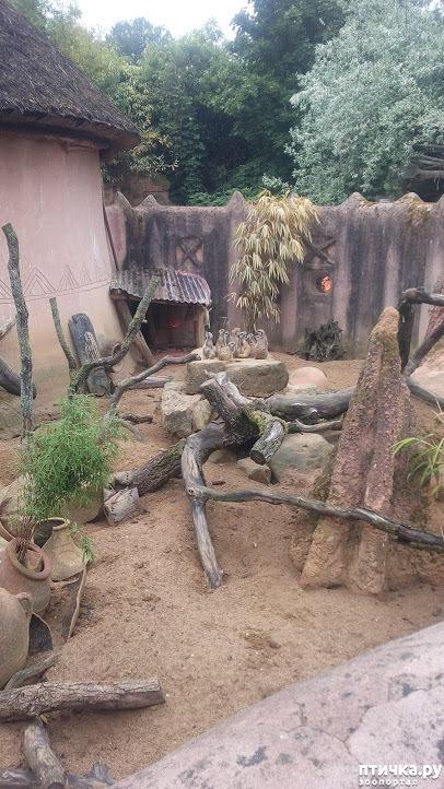 фото 13: Как я прошлась по зоопаркам