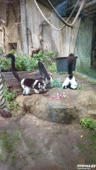 фото 14: Как я прошлась по зоопаркам