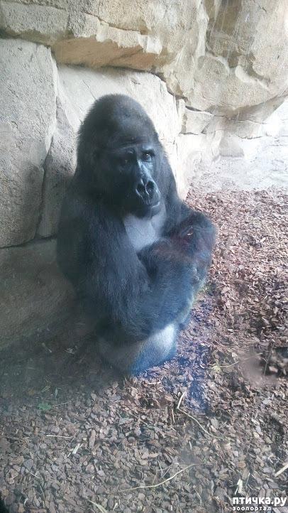 фото 15: Как я прошлась по зоопаркам