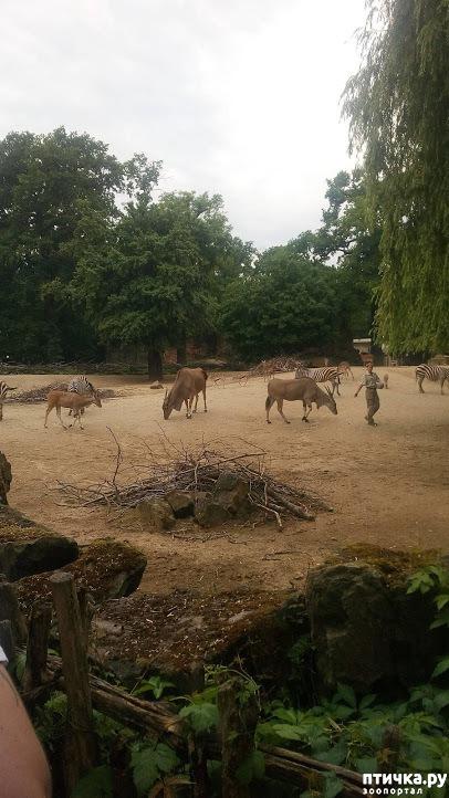 фото 18: Как я прошлась по зоопаркам