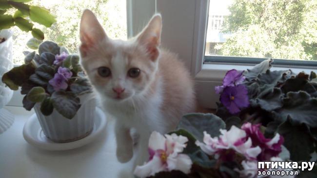 фото 1: Пристройство котят: затишье было недолгим