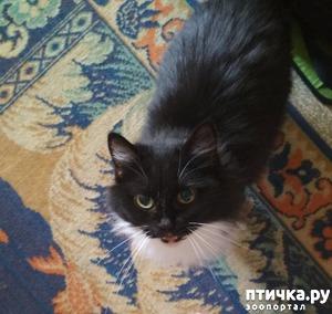 фото: Роковая женщина в кошачьей шубке. Как у нас появилась кошка Пуся
