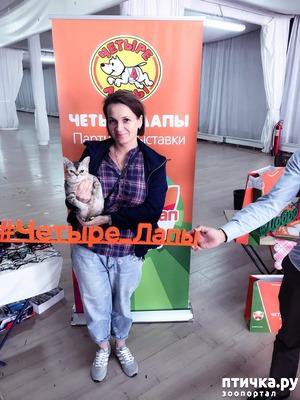 фото: Наши любимки Майя и Маруся на выставке, и после неё отдыхают