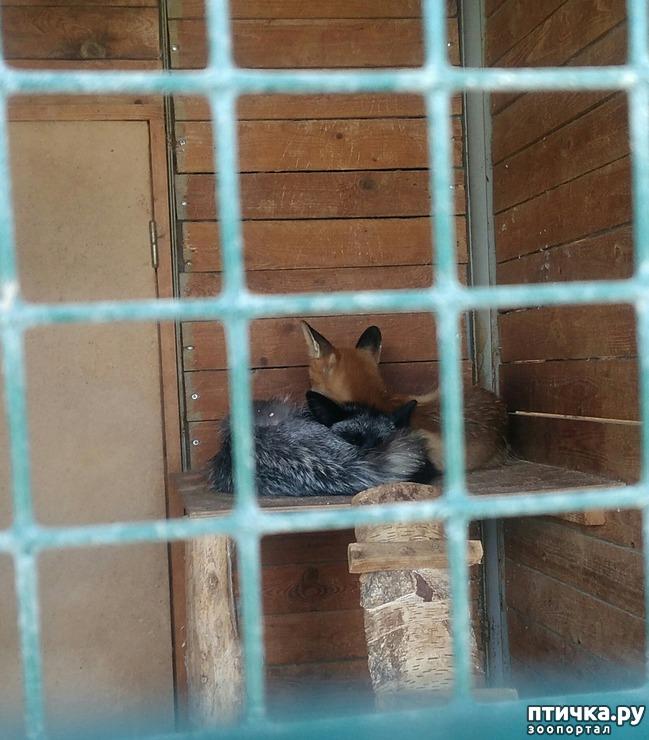 фото 16: Самарский зоопарк.