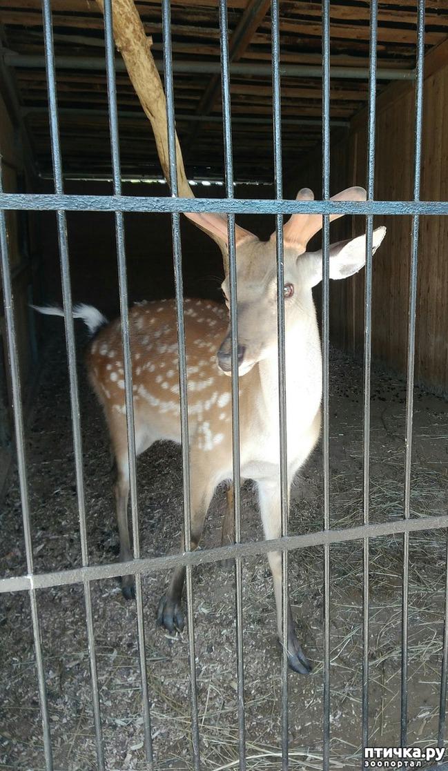 фото 18: Самарский зоопарк.