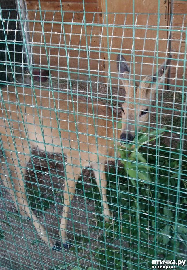 фото 17: Самарский зоопарк.