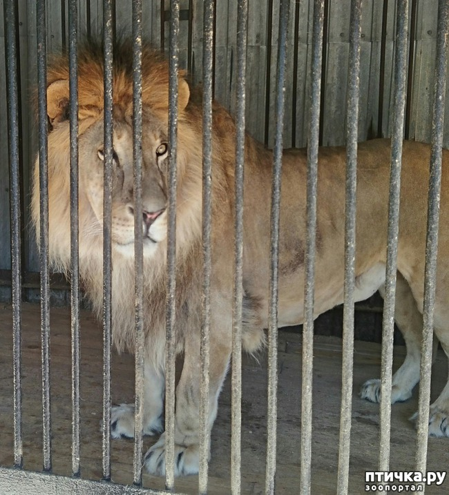 фото 7: Самарский зоопарк.