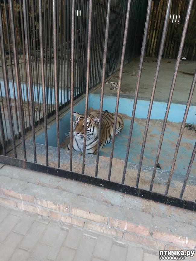 фото 9: Самарский зоопарк.
