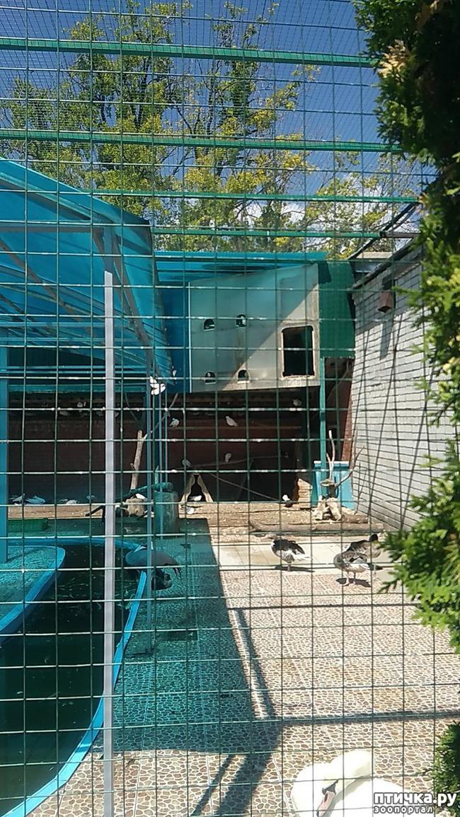 фото 25: Самарский зоопарк.