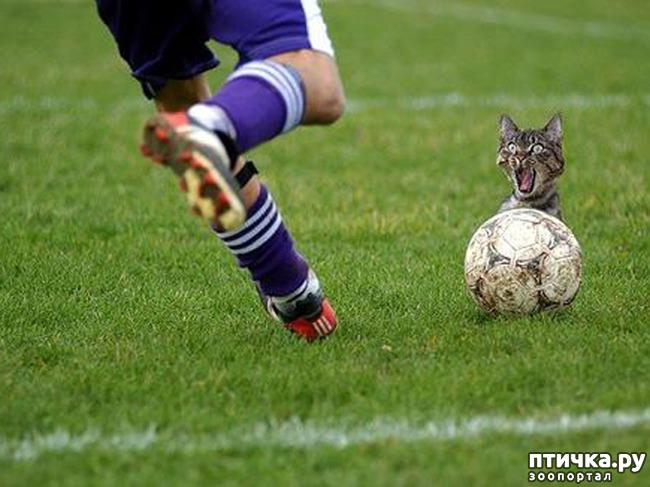 фото 2: Футбол и кот