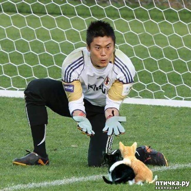 фото 4: Футбол и кот