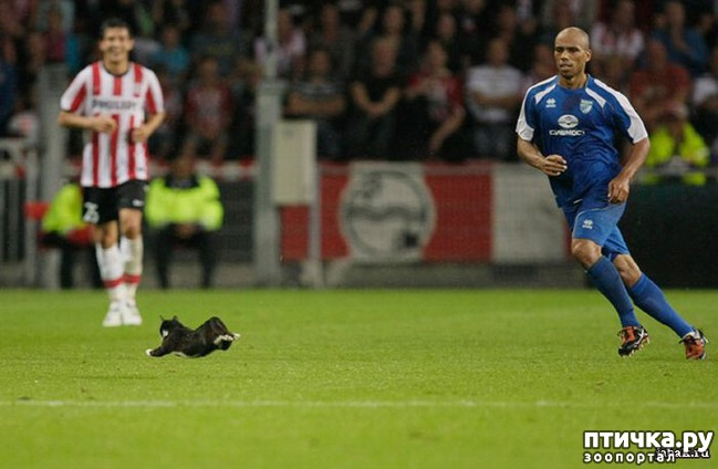 фото 6: Футбол и кот