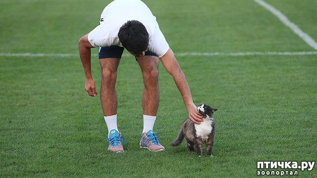 фото 7: Футбол и кот