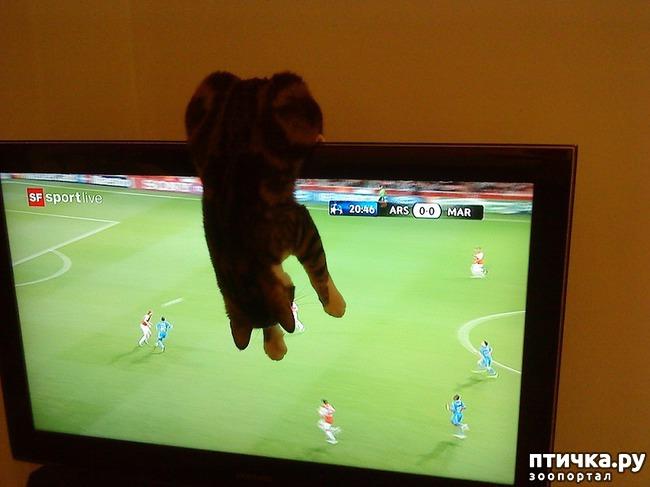 фото 8: Футбол и кот