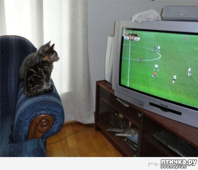 фото 9: Футбол и кот