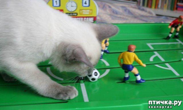 фото 10: Футбол и кот