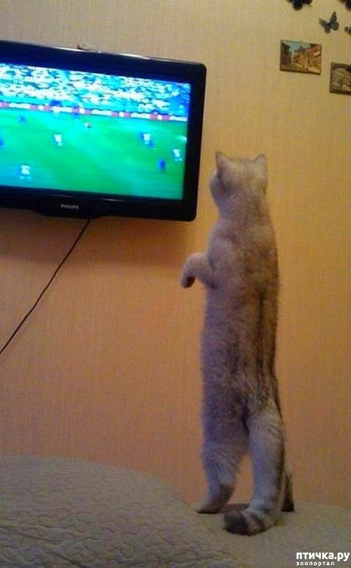 фото 11: Футбол и кот