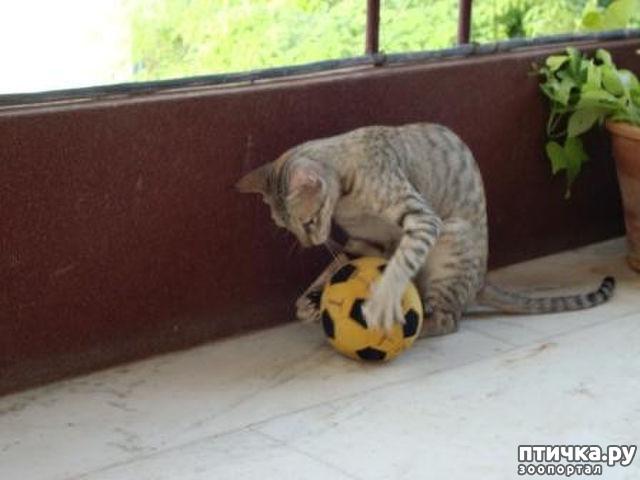 фото 12: Футбол и кот