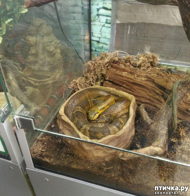 фото 27: Самарский зоопарк.