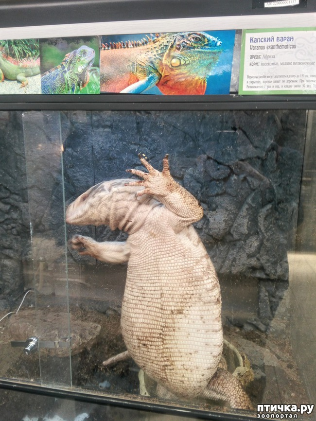 фото 28: Самарский зоопарк.