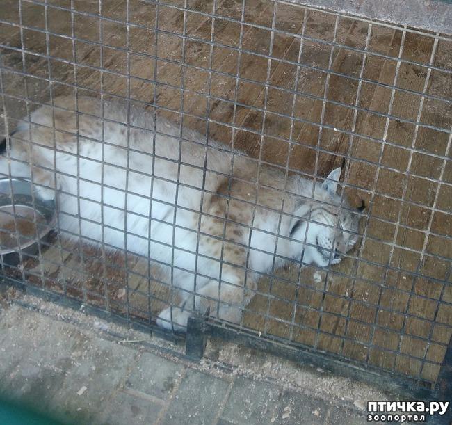 фото 10: Самарский зоопарк.