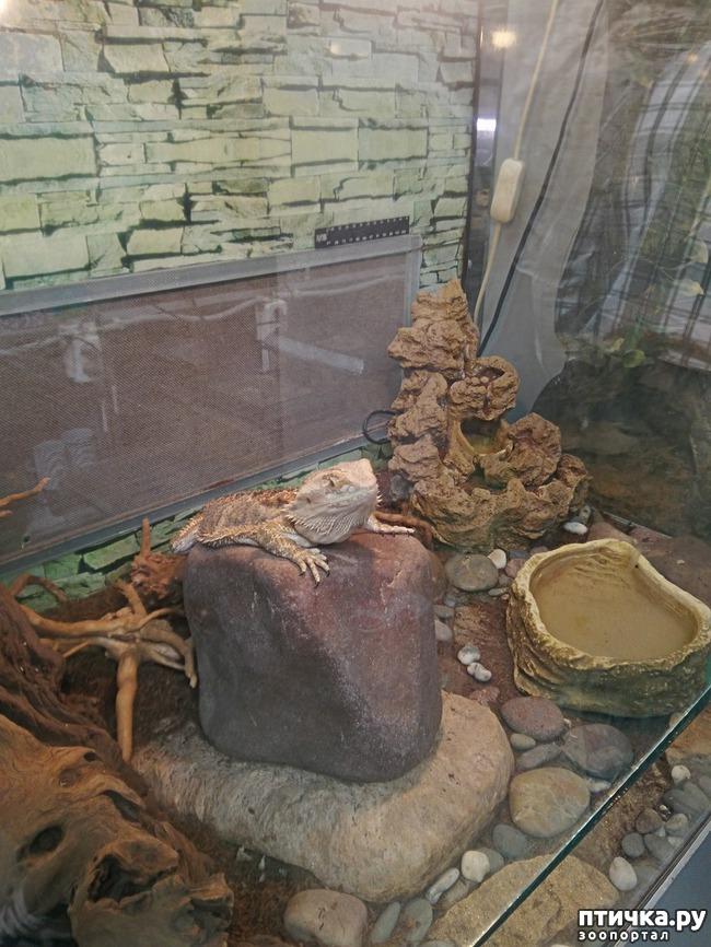 фото 31: Самарский зоопарк.