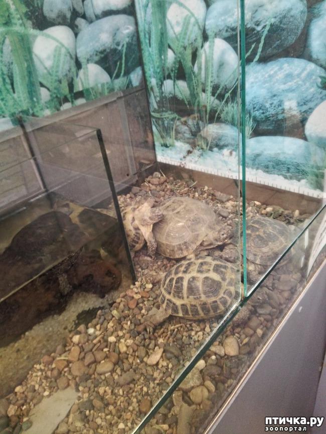 фото 34: Самарский зоопарк.