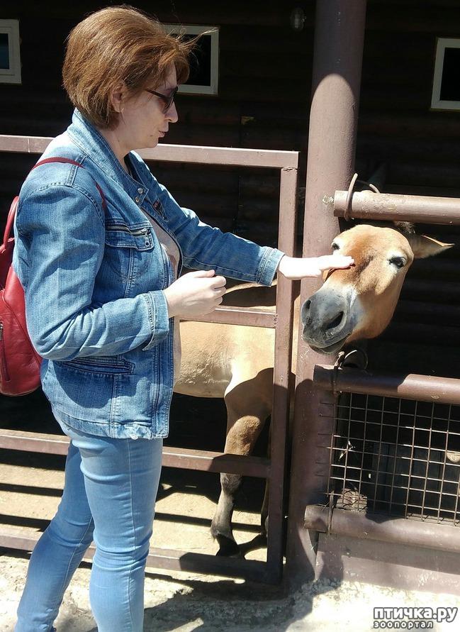 фото 5: Самарский зоопарк.