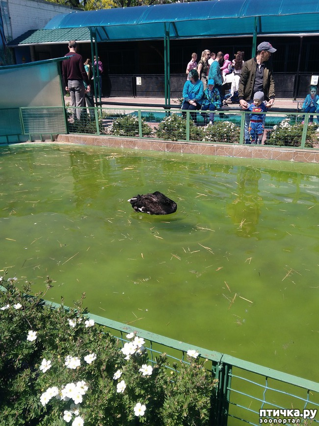 фото 36: Самарский зоопарк.