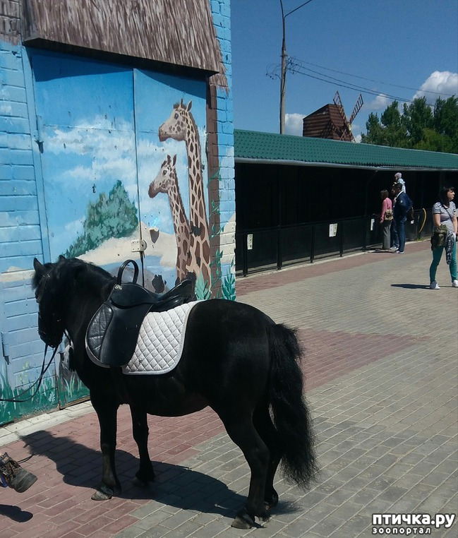 фото 14: Самарский зоопарк.