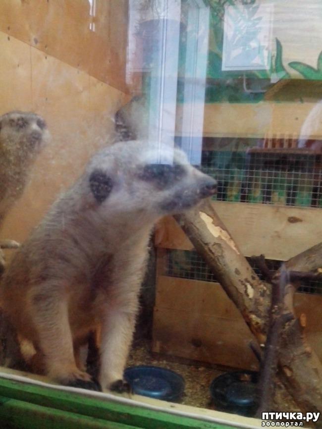 фото 16: Некоторые жители Казанского зооботсада