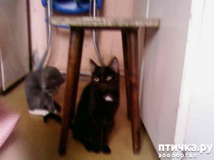 фото: Уличная кошка дома. Печальная история Лины
