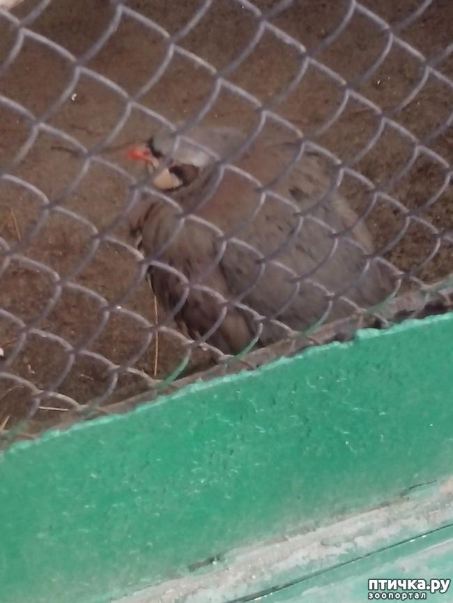 фото 4: Некоторые жители Казанского зооботсада